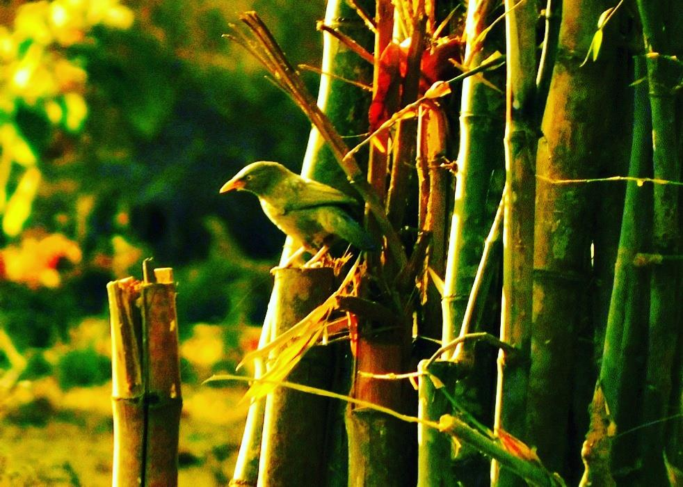 Green Bird On Green Bamboo
